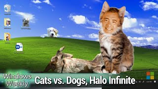 It's a Cat-Eat-Dog World - Cats vs. Dogs, Android on Windows, Halo Infinite
