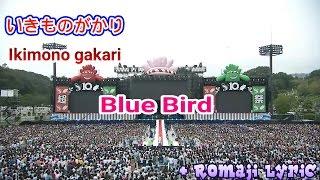 Gambar cover Ikimono gakari - Blue Bird + Romaji Lyric [Atsugi Show]