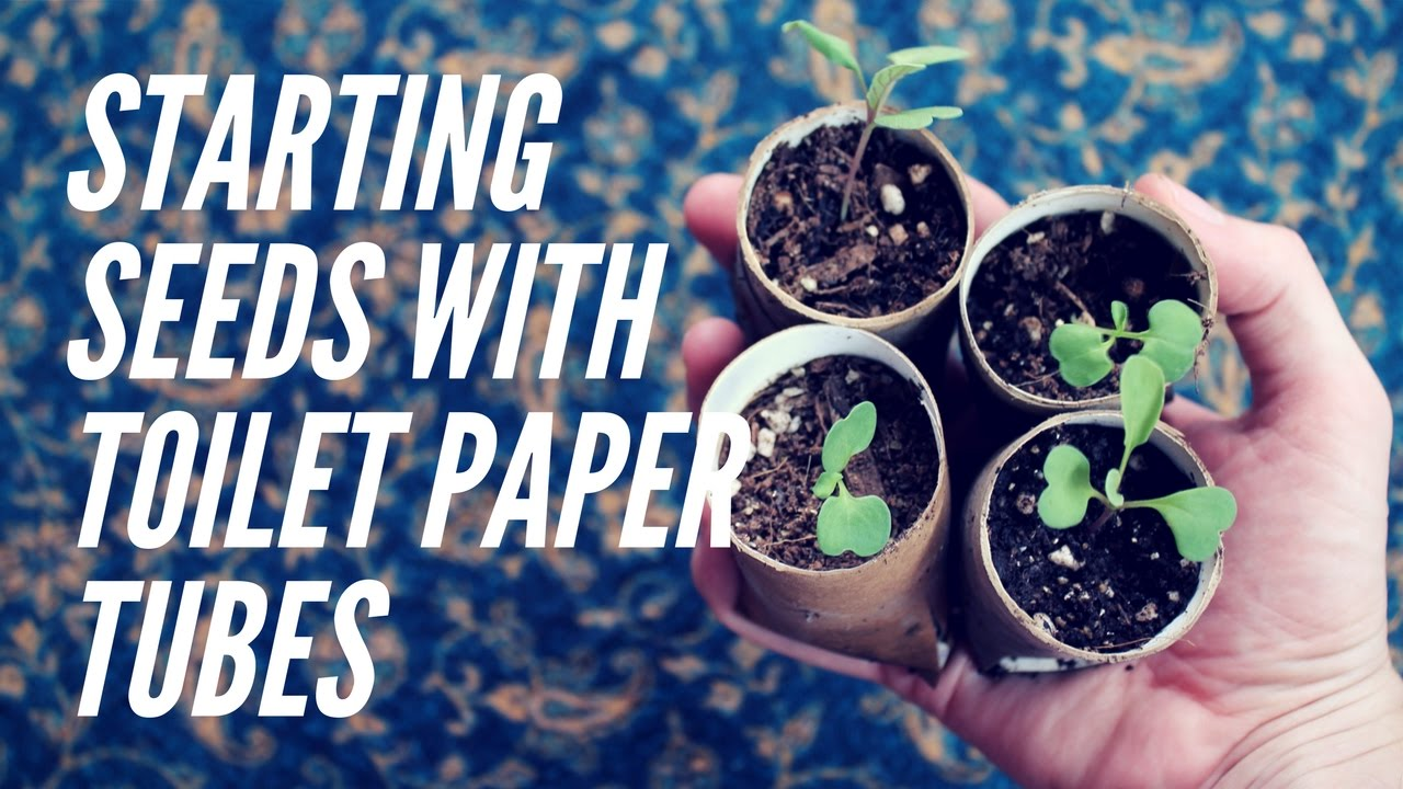 Toilet paper tube pots | Homemade DIY Biodegradable seed starting ...