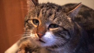 Наглый, вредный кот