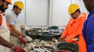R/V Dr Fridtjof Nansen_EAF-Nansen project_Sorting fish