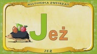 Multipedia Zwierząt. Litera J  - Jeż