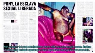 EDAN !!! Orangutan Di Jadikan PSK Sampai Diberitakan MEDIA ASING
