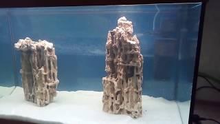 Новый интерьер нашего аквариума. Белый песок, камни и гигантская валлиснерия