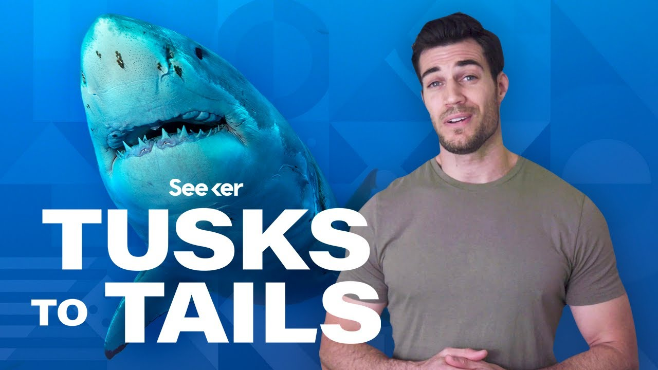 How Sharks Use Electricity To Sense Prey