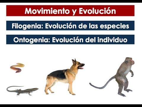 Movimiento y evolución (Desarrollo Neuromotor)
