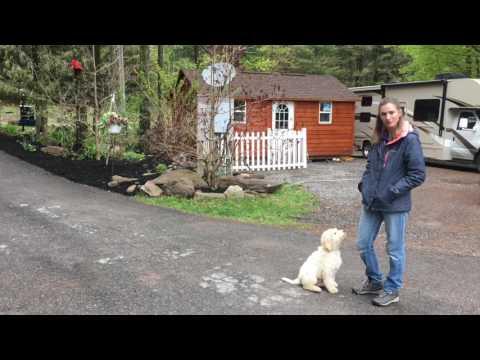 Lewis Manor Labradoodles Puppy Training: Bentley