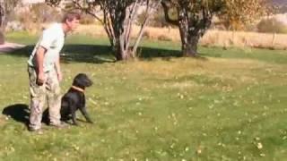 Dog Trainer Aspen Colorado