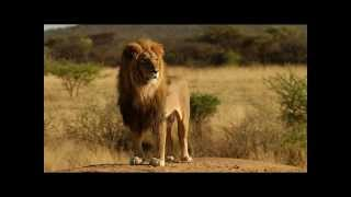 From Calling the Animals to the Lion