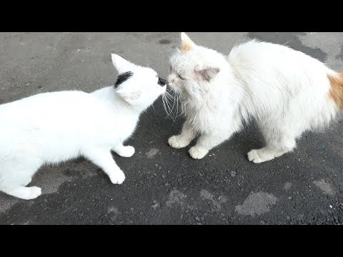 White cats with a tortie cat they friendly
