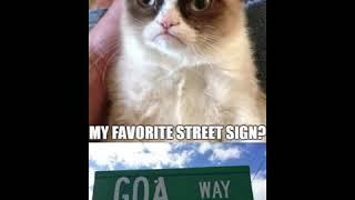 Clean grumpy cat meme compilation