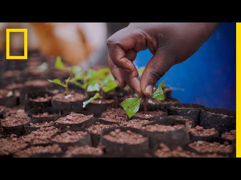 How Sustainable Plantations Help Save Uganda's Decimated Forests | Short Film Showcase
