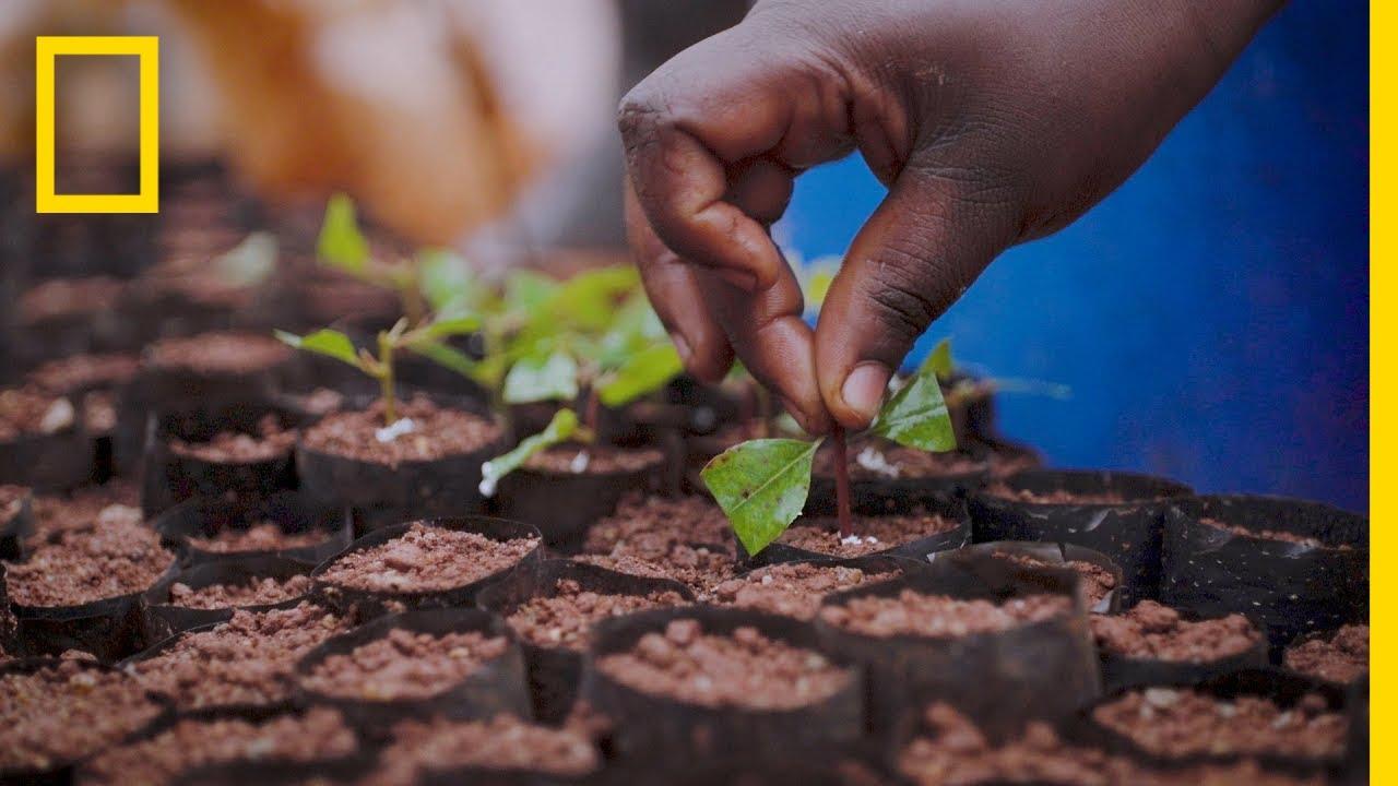 How Sustainable Plantations Help Save Uganda's Decimated Forests | Short Film Showcase