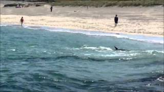 Angry dolphin attempts to attack swimmer