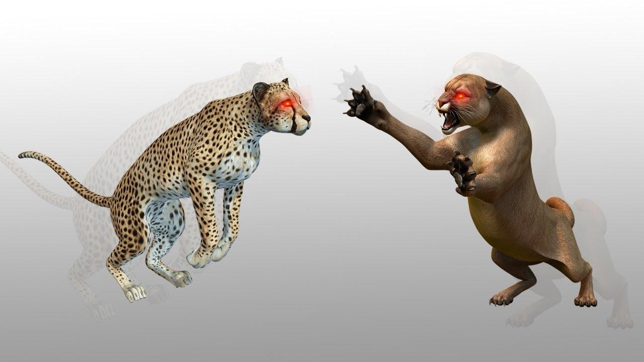 Puma vs Cheetah   Dan Pemenangnya Adalah ...