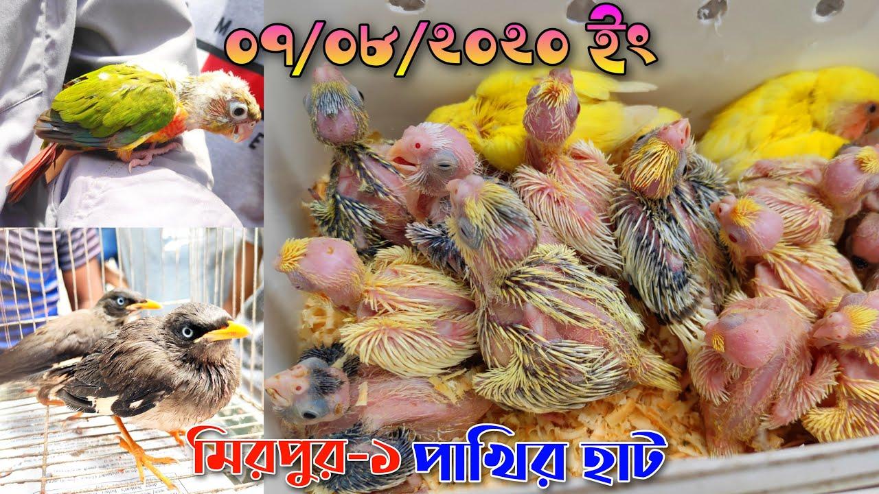 মিরপুর-১ পাখির হাট ০৭/০৮/২০২০ | Mirpur-1 Pakhir Hat | ঈদের পরে প্রথম হাট | Pakhi Palon Bsngla