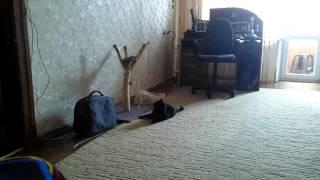 Когтедралка своими руками для любимой кошки