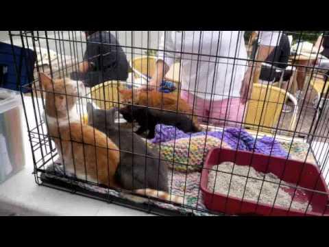 Pacific Coast Pets Adoption Event
