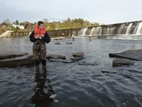 salmon fishing oswego river youtube
