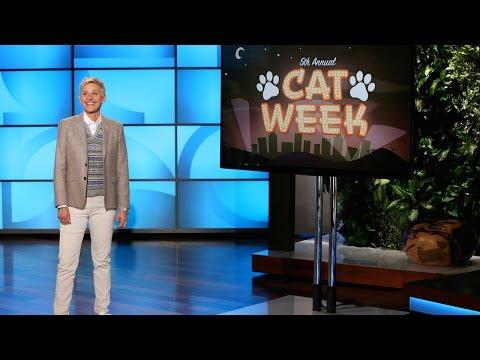 Cat Week, Day 3!