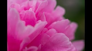 美しい花をコラボしました。テレサテンの曲に耳を傾けながら花を観賞し...