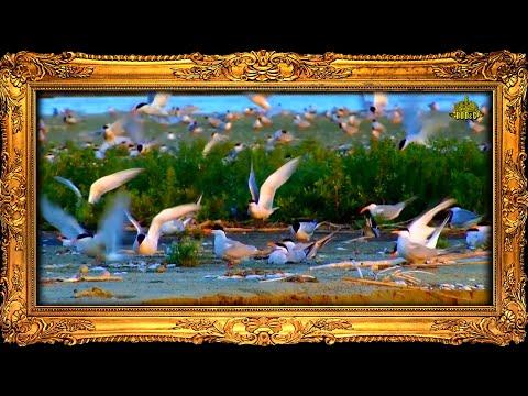 Johann Strauss - The Beautiful Blue Danube (Штраус - На прекрасном голубом Дунае) 1080p