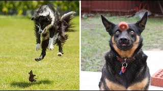 FUNNY DOGS AND CATS VIDEOS |