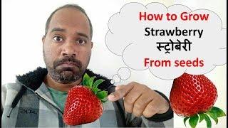 How to grow Strawberry from seed बिज से स्ट्राॅबेरी बढाए