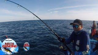 Download lagu Tarikkan Mantap Ikan Barakuda Sampai Kebawa ke Belakang Perahu - Mata Pancing (16/12)