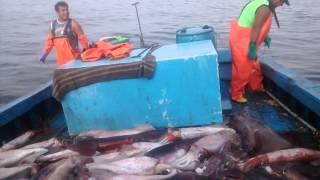 Pesca de pota en paita.