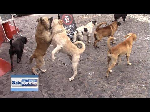 Jauría De Perros Callejeros Amenaza Para Ciudadanos Y Turismo.