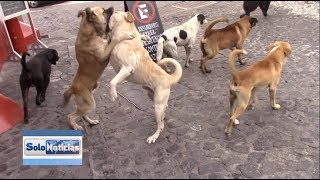 Gambar cover Jauría de perros callejeros amenaza para ciudadanos y turismo.