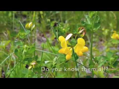 Flora Incognita Tutorial Video