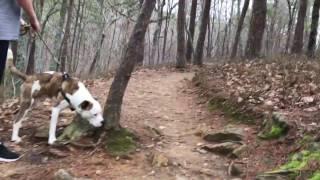 Pine Mountain - Short Hike