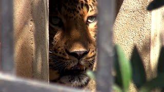 Азербайджан своим ходом || Драка медведей || Идем в зоопарк Баку || Я люблю Баку