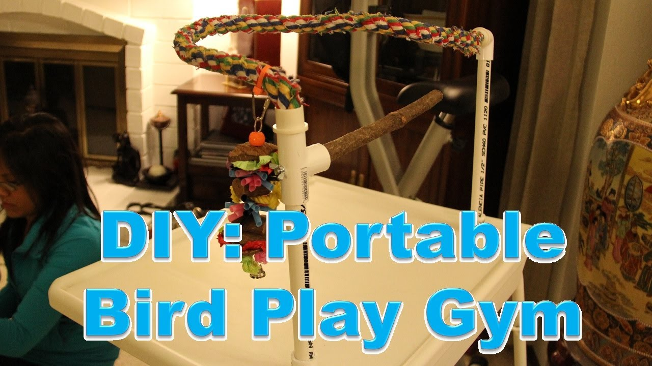 Diy Pvc Portable Bird Gym Youtube