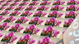 Vicolo Florist HD 720p