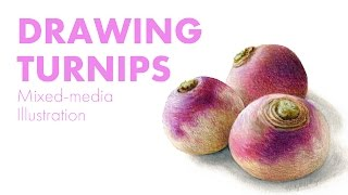 Colored Pencil Food Illustration of Turnips