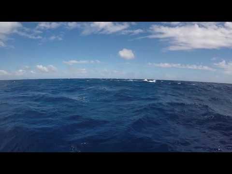 Tonga 2017 flapping whales