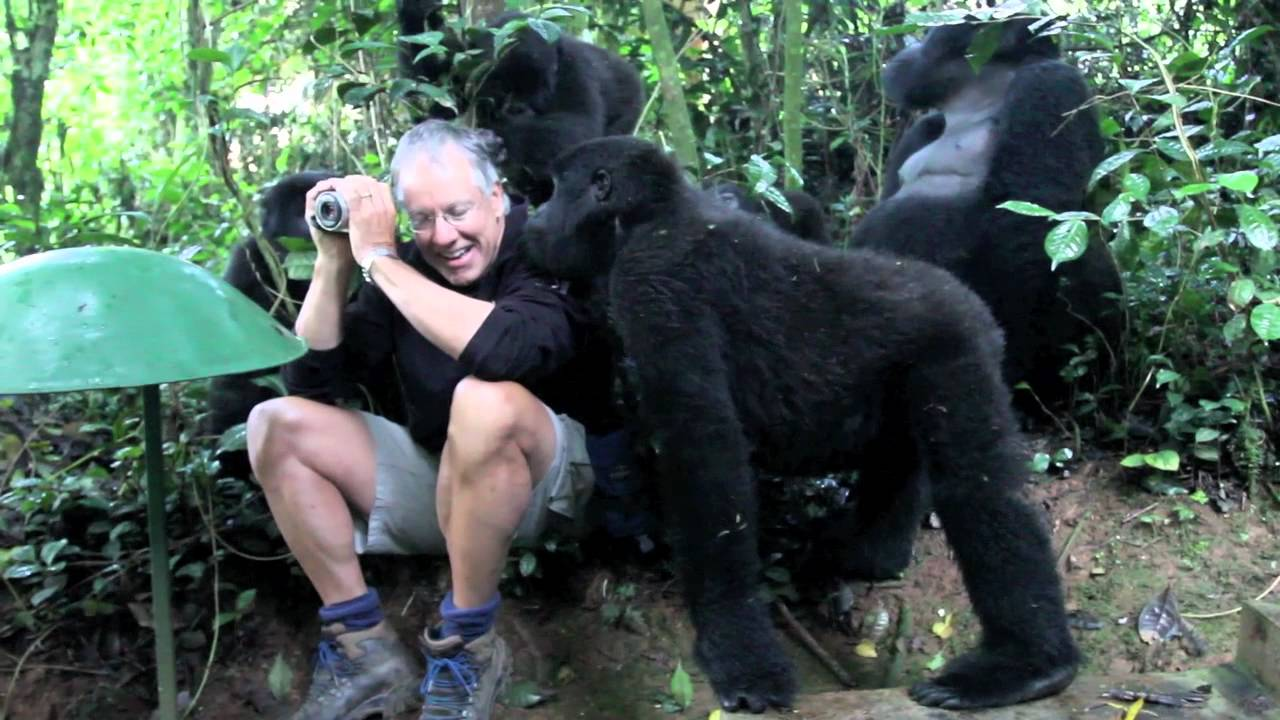Touched by a Wild Mountain Gorilla short  YouTube