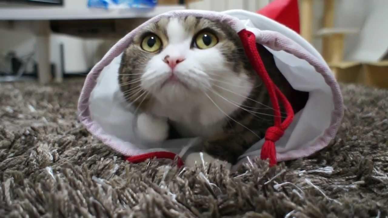 котенок смешной картинки