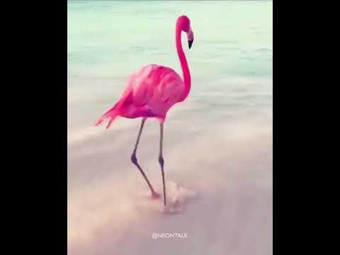 FLOMINGO