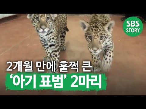 TV 동물농장 (544회)_02