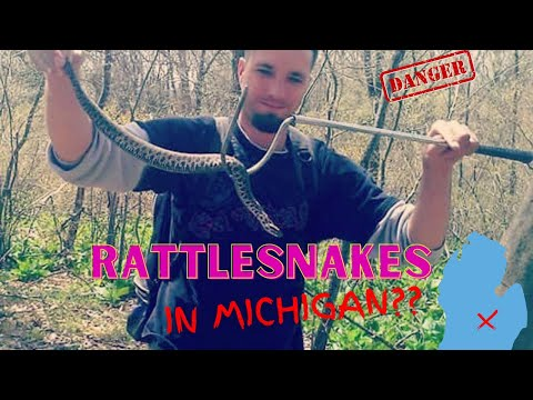Rattlesnakes Exist In Michigan!!  The Ra