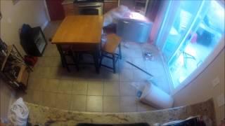 Köpeği evde yalnız bırakırsanız ne olur?