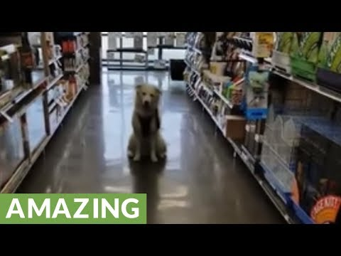 Super smart pup performs tricks in grocery store