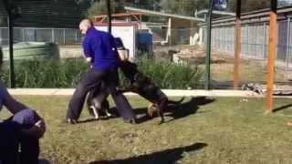 Steve Austin Dangerous Dogs Training