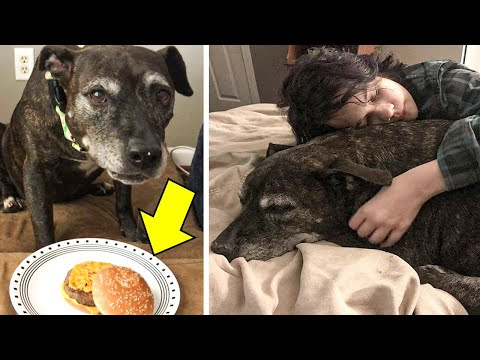 Dog Diagnosed With Terminal Cancer Fulfills Her Wild Bucket List