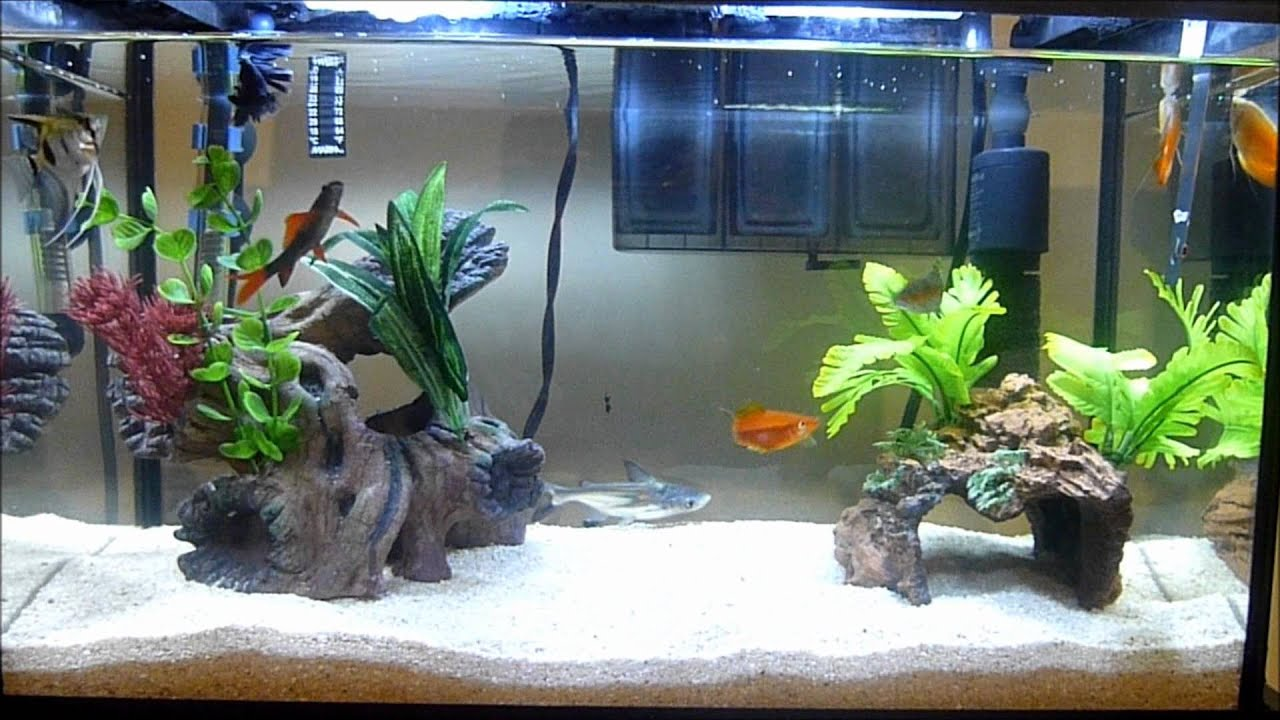 Tropical fish aquarium youtube for Exotic fish tanks