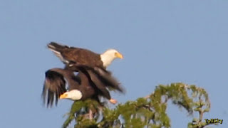 Virtual Hike: Waldo Lake, then Bald Eagles - 40min
